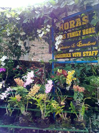 Horas Family Home : main entrance