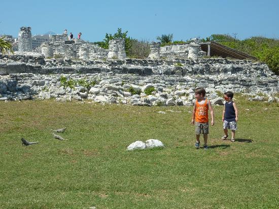 Ruines El Rey (Zona Arqueologica El Rey) : The iguanas are everywhere!