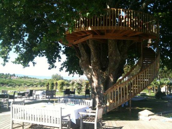 Saint-Saturnin-les-Apt, Fransa: Déjeuner sous l'arbre
