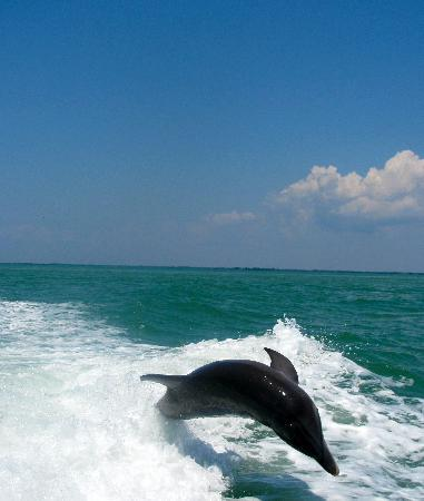 Sanibel Island Cruise Line : Exciting and amazing