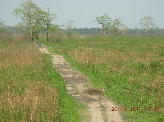 Kaziranga National Park, Índia: A view of the wild safari in Kaziranga