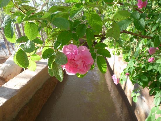 Kasbah ISWAN : la rose est éclose...
