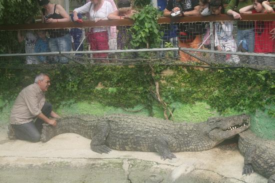"Crocodile Park: ""BIG DADDY"""