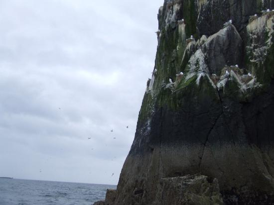 Greycroft : The Farne islands