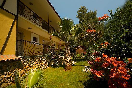 橄欖樹一室公寓酒店照片