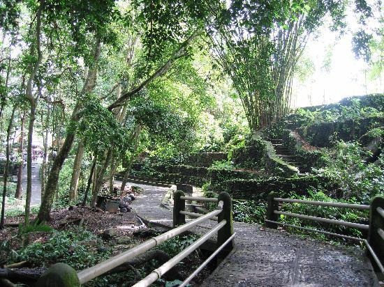 Villa Kerti Yasa: monkey Forest