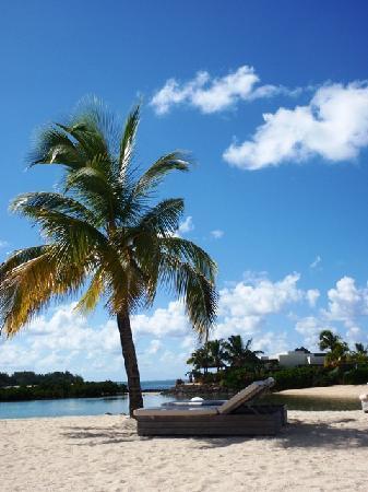 Sunbeds under coconut palms on the beach