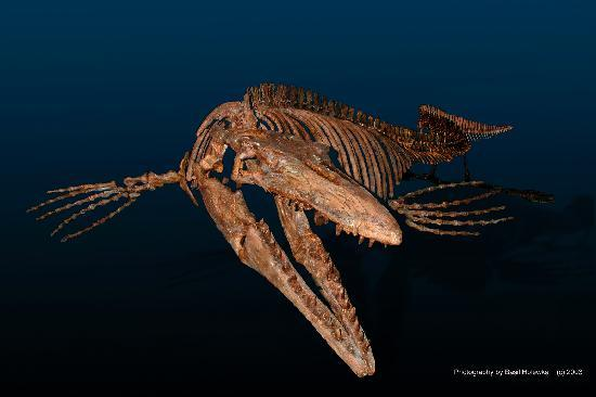 Canadian Fossil Discovery Centre: Bruce Mosasaur is now on Facebook!
