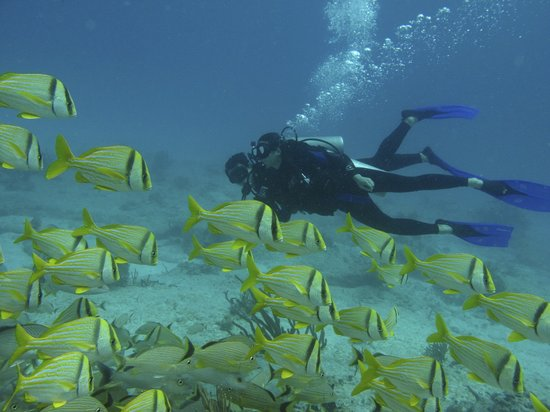 The Scuba Tribe: a school of fish with all eyes on you