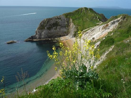 Jurassic Coast : Between Lulworth Cove and Durdle Door