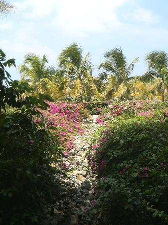 Grand Palladium Jamaica Resort & Spa: Garden in resort.
