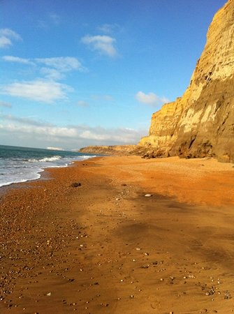 Isle of Wight Fossil Hunts - Island Gems