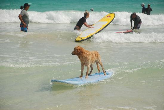 Macao Surf Camp: Jake the dog.