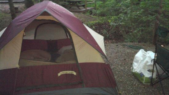 Jenny's Creek Campground: comfy