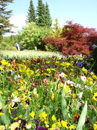 Grüningen, Schweiz: Blütenpracht