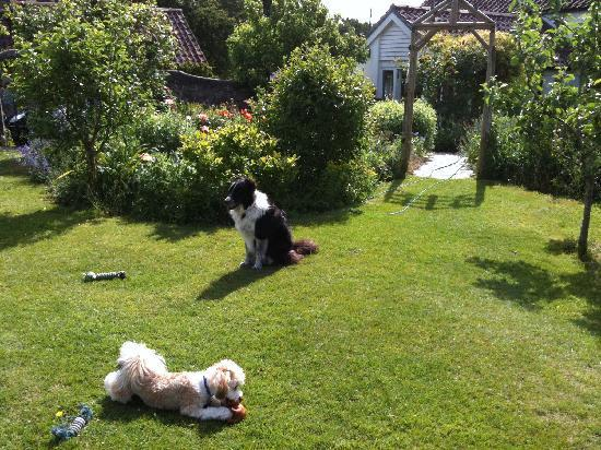 York Cottage: Woody with Mungo in the fabulous garden!