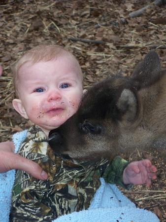Running Reindeer Ranch: baby gets tired of Rufus kisses
