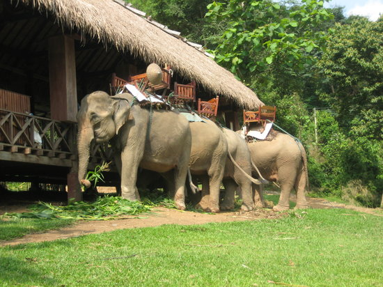 Elephant Village Sanctuary Day Trips : Preparing the elephants for the ride