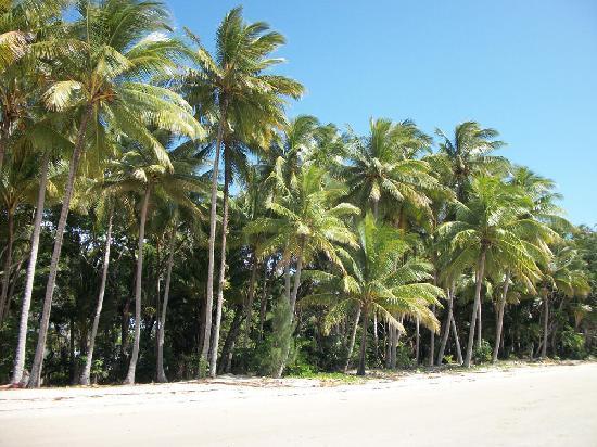 Port Douglas b&b Four Mile Beach: Four Mile Beach