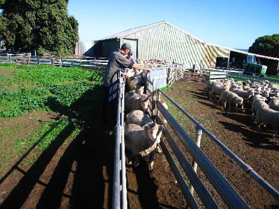 Antechamber Bay Retreats: Farm life