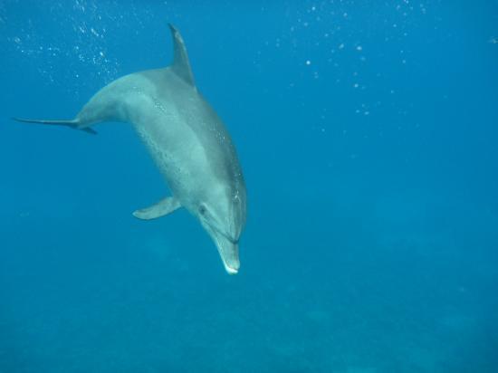 Amy Reisen: Delfine Dolphinhouse Hurghada