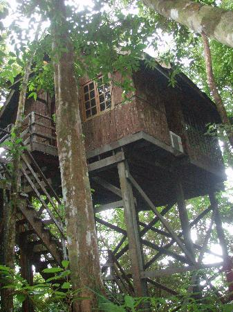 Permai Rainforest Resort: The Tree House from outside