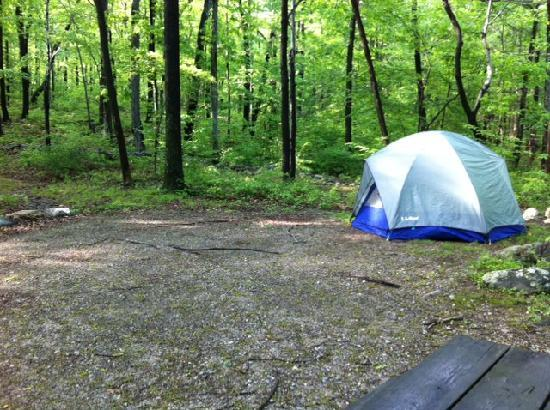 Camp Taylor: Campsite is clean and gorgeous...
