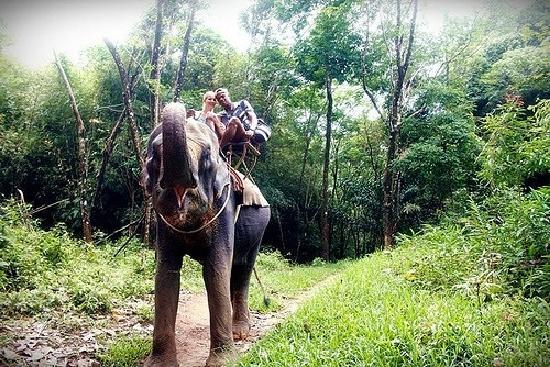 Khao Lak Emerald Beach Resort & Spa: elephant ride 15min walking distance from hotel