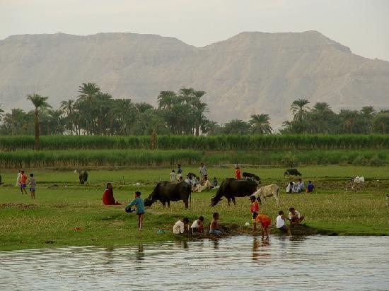Assouan, Égypte : Hektisches Leben am schmalen Nilufer