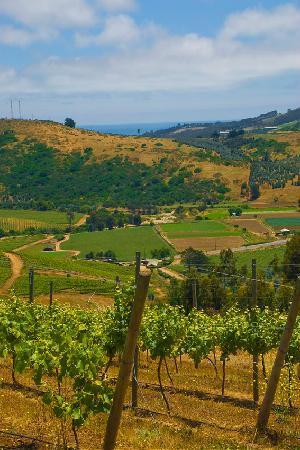 Vina Casa Marin Winery: Vineyard view of the ocean