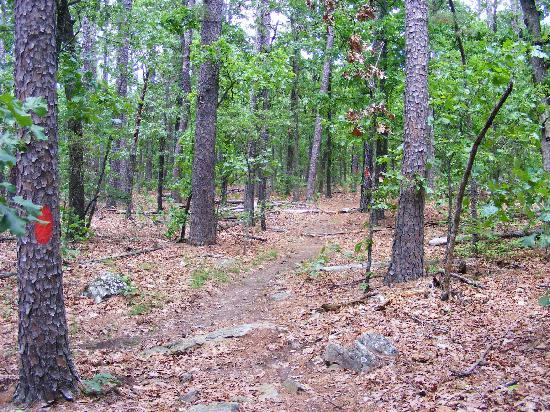 Wilburton, OK: Hiking Trail - Coon Creek