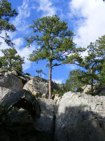 Robbers Cave State Park: Pine Trees Aplenty!