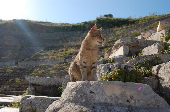 Ephesus Tours: What's with the cats?