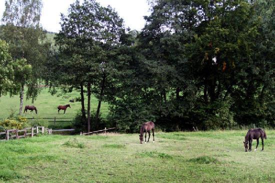 Haus Berghoff Apartmenthotel: Pferdewiese
