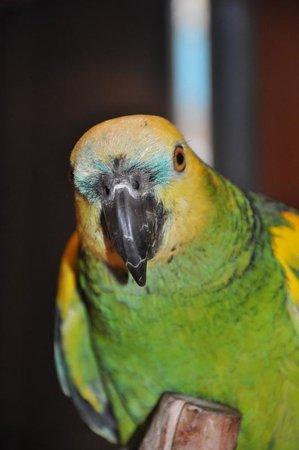 Casa Yaguarete : Our parrot Lucas 10 years old