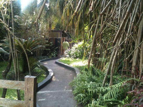 African Garden Lodge: the route to the garden bar