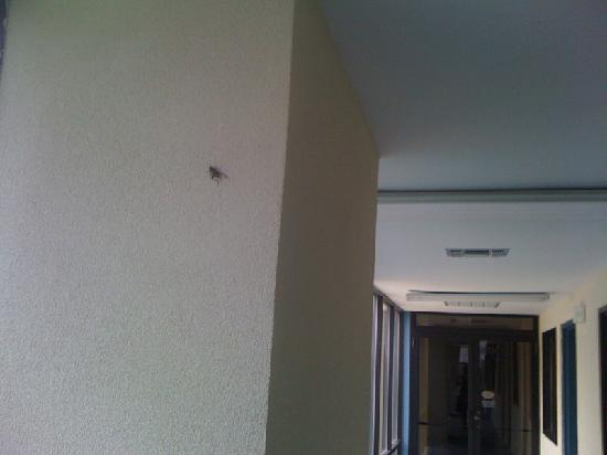 Quality Inn & Suites - Round Rock: Bugs climbing on the wall!
