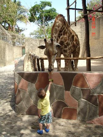 Barcelo Puerto Vallarta: zoo