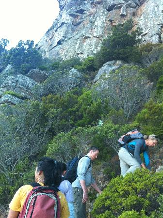 Table Mountain Walks: step by step