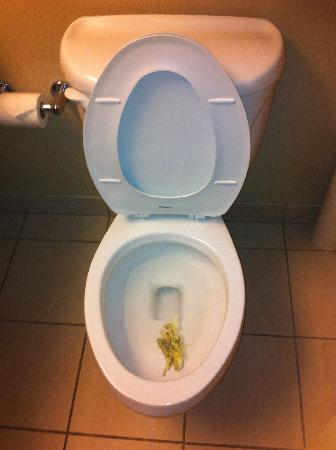 Hyatt Regency Cleveland at The Arcade: Disgusting Toilet  in the bathroom