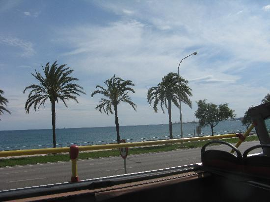 Aparthotel Tropicana Cala Millor : palmen