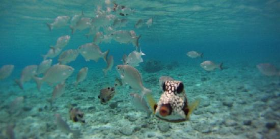 West Hill Bungalows : Underwaterworld Porto Marie