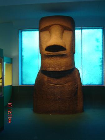 Dum Dum Museum Of Natural History Location