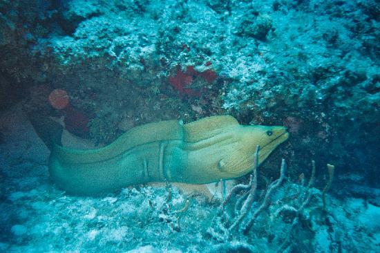 Two D's Diving and Tour Adventures: The biggest eel I've ever seen