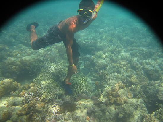 آيلا هاياهاي بيتش ريزورت آند ريستورانت: our snorkel guide