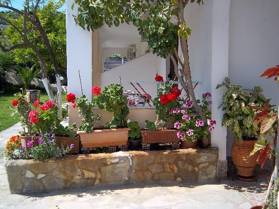 Yialis Apartments: more pots and planters
