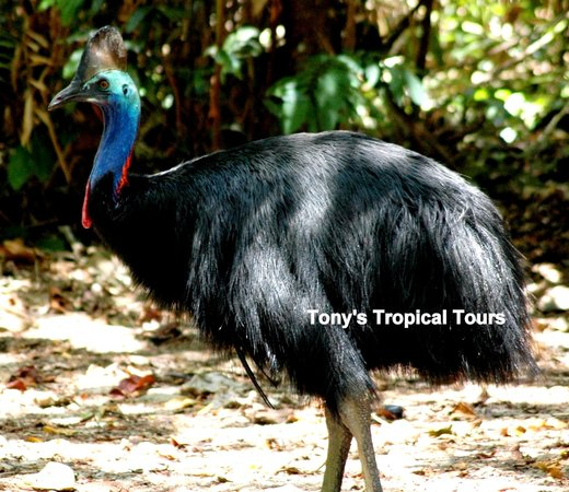Tony's Tropical Tours
