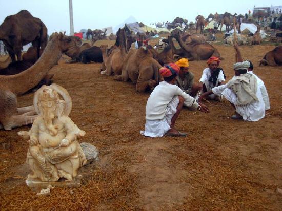 Πουσκάρ, Ινδία: Pushkar Camel Fair