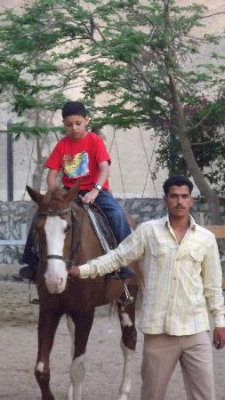 Siwa Inn Am Agbenek : horde riding