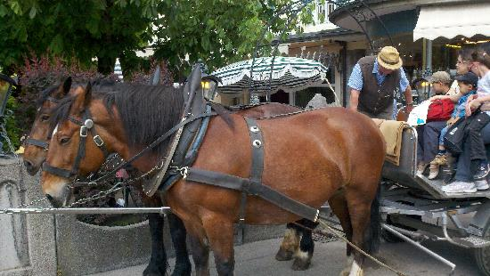 Fancy Bus Tours: Horse carriage down from the Castle